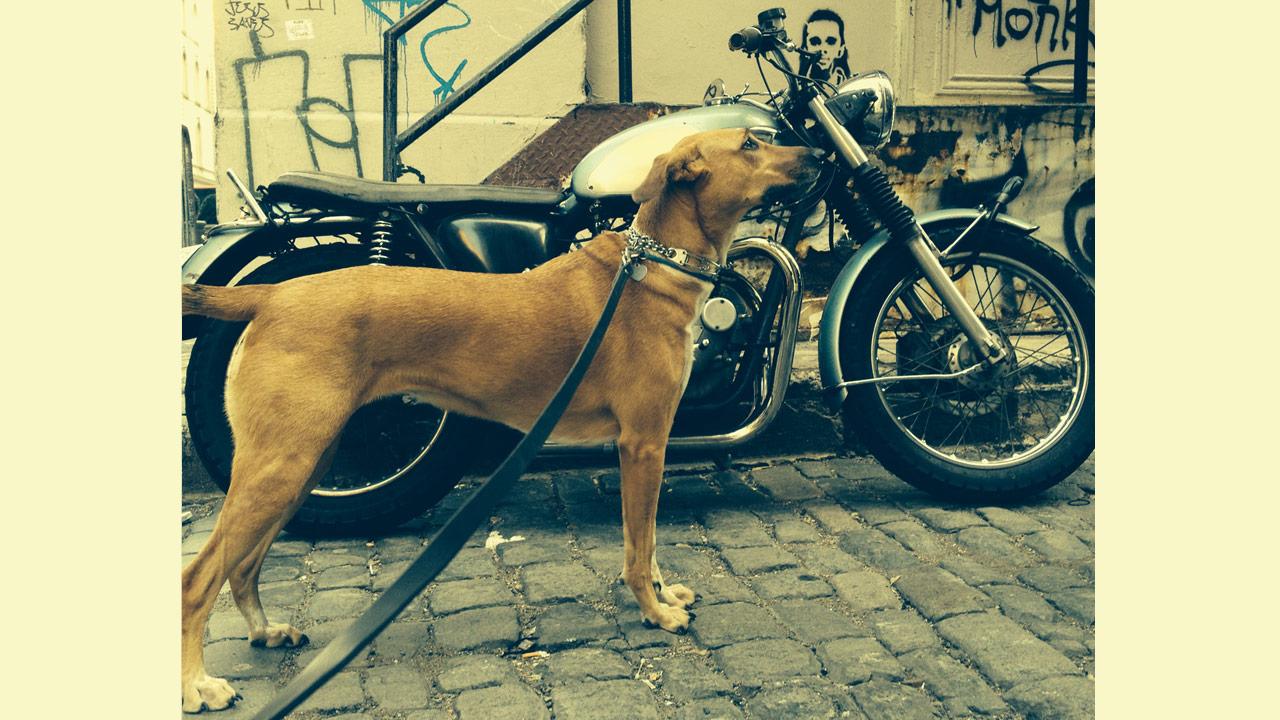 dog-and-cycle2